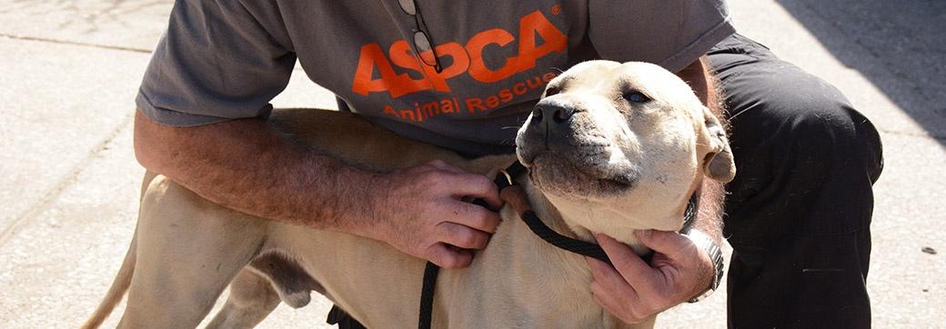 blog_dog-rescue-wizsmart.jpg