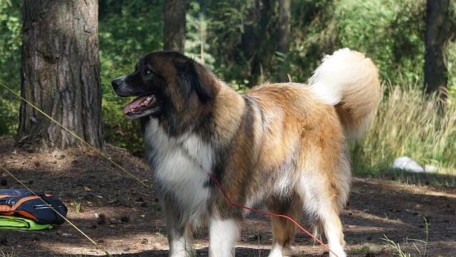 dog-2651408_640