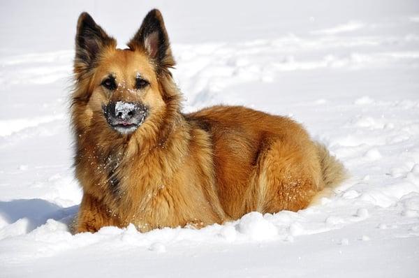 dog-94167_640