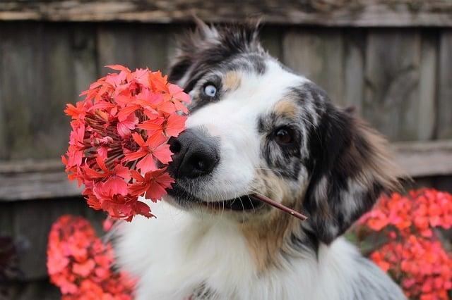 flowers-1845074_640